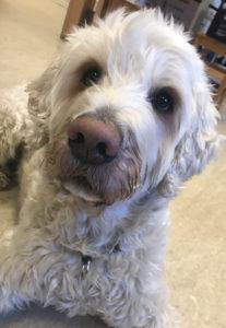 Charlie kontorhund ansattbilde